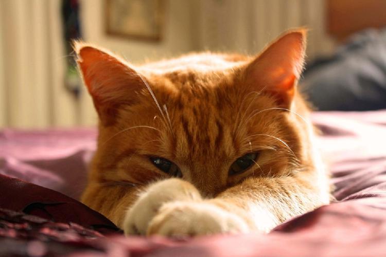 Эксперты назвали 11 преимуществ жизни с кошками