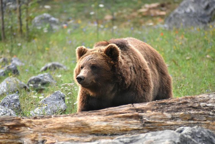 В Хабаровском крае медведь эксгумировал покойного