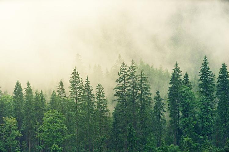 Изменения лесов приведут к большему числу наводнений в Сибири