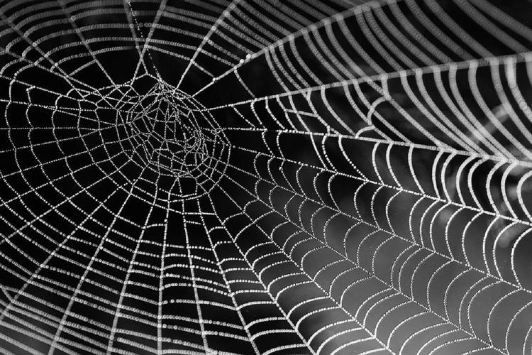 В Астрахани участились случаи нападения пауков каракуртов на людей