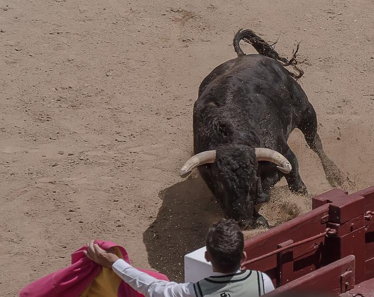 В Каталонии бык вырвался из загона и ранил 17 человек