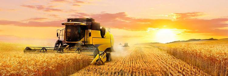 Очаговое сельское хозяйство России приводит к деградации отрасли