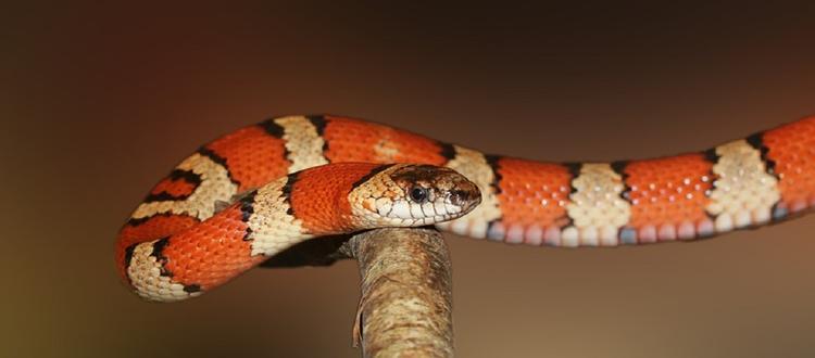 Мужчина торговал через интернет несуществующими змеями в Московской области