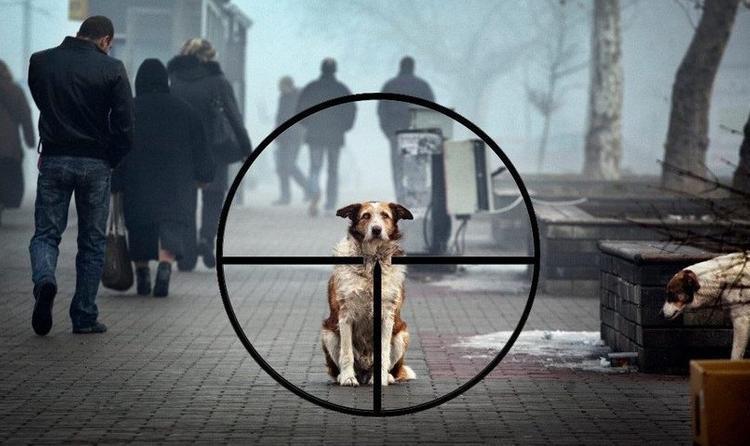 Догхантер напал на супружескую пару, которая гуляла со своей собакой