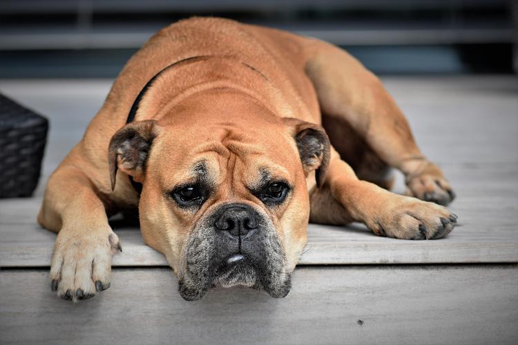 В Норвегии обнаружена неизвестная смертельная для собак инфекция