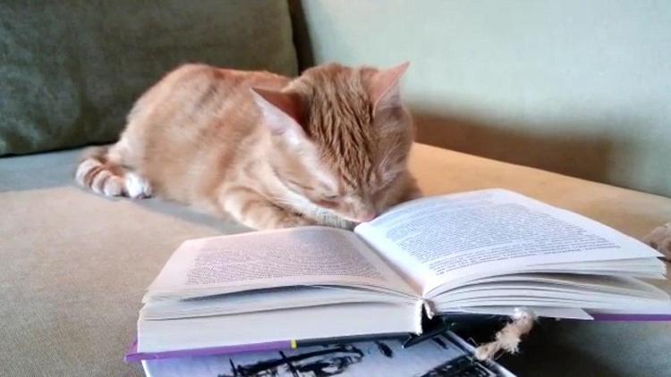 Кот Персик из Подмосковья обожает читать Чехова