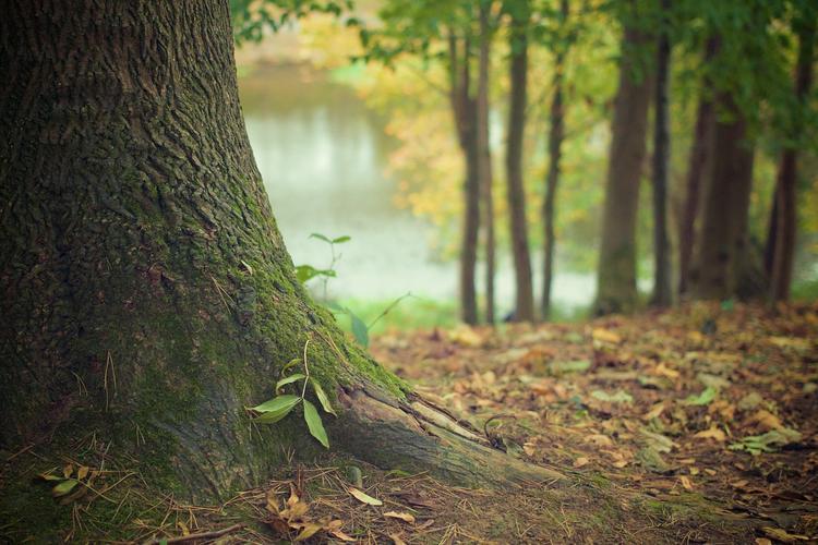В Ленинградской области 20-летний мужчина похитил школьницу и прятал в лесу