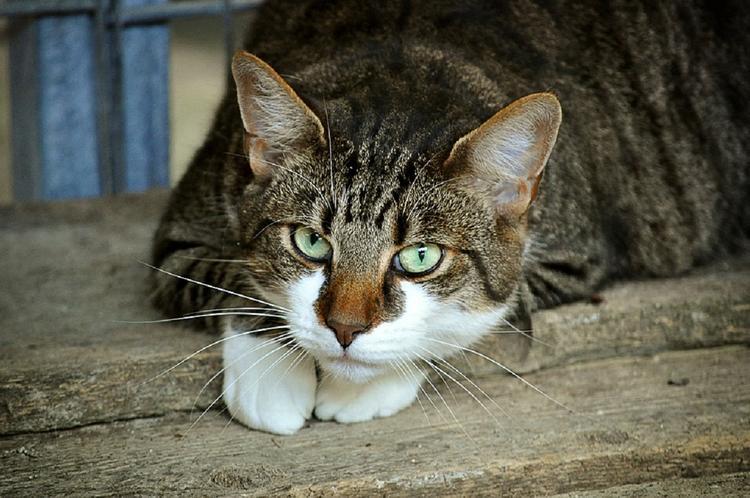 Кота с пулевым ранением спасли в Подмосковье
