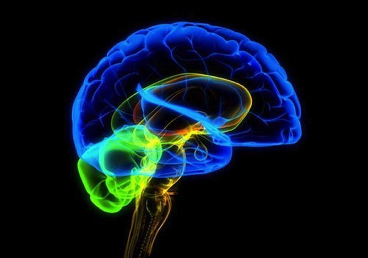 Ученые обнаружили белок, способный остановить болезнь Альцгеймера