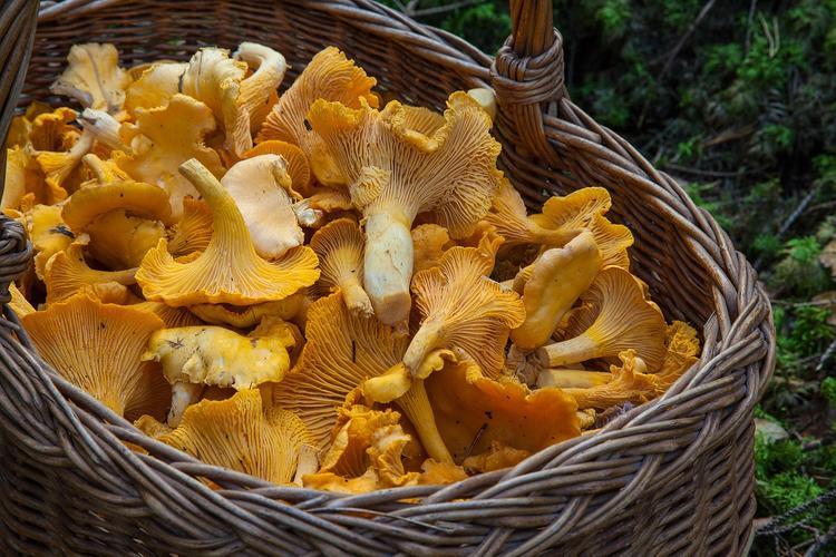 Скрывавшую грибные места пенсионерку нашли через шесть дней в лесу Архангельской области