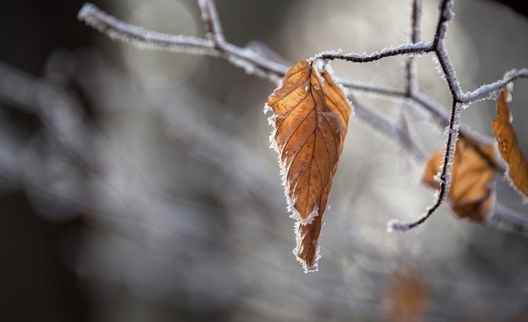 В воскресенье москвичей ожидают низкая температура и снег