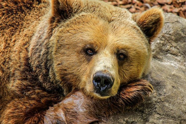 Женщина погибла в результате нападения медведя в Забайкалье