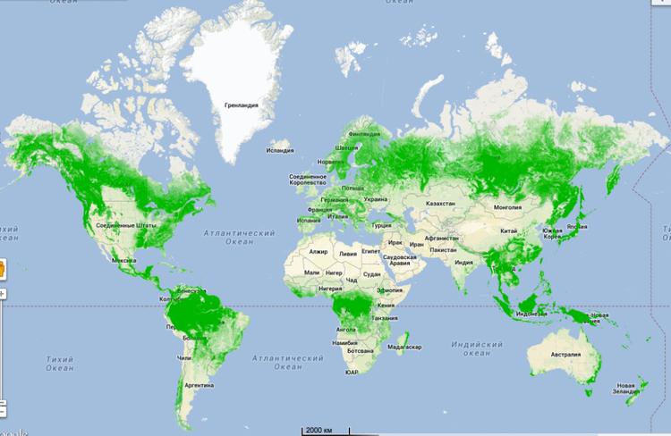 Великая нужда - сажать лес...
