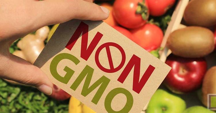 Все истории о «вредных ГМО»
