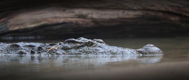 Крокодил  напал на женщину во время мытья посуды