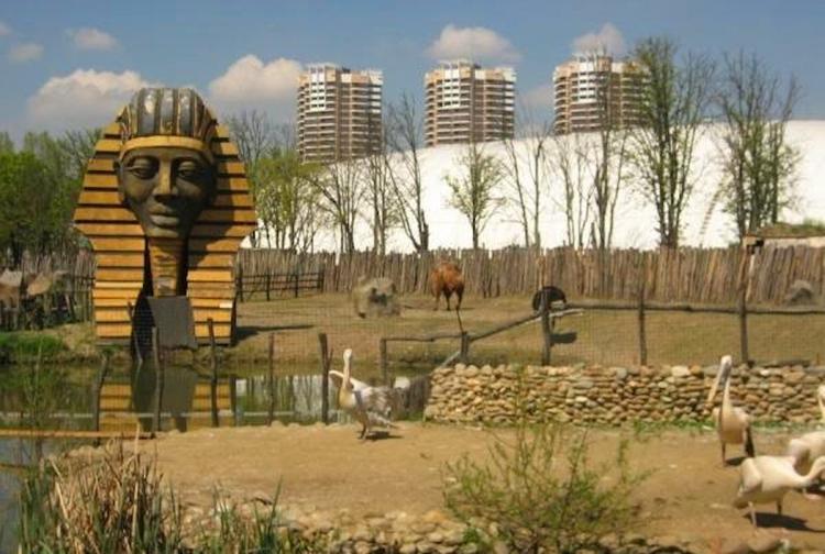 «Сафари-парк» прикрывается животными, чтобы утаить юридические махинации