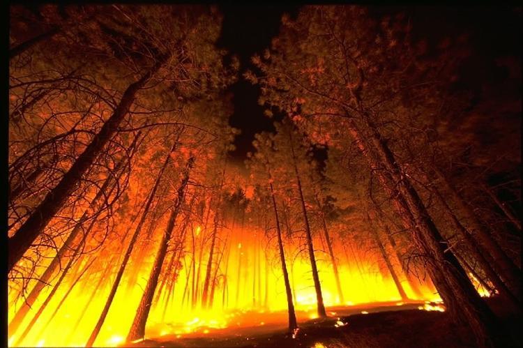 Мощные лесные пожары распространяются в Сирии и Ливане