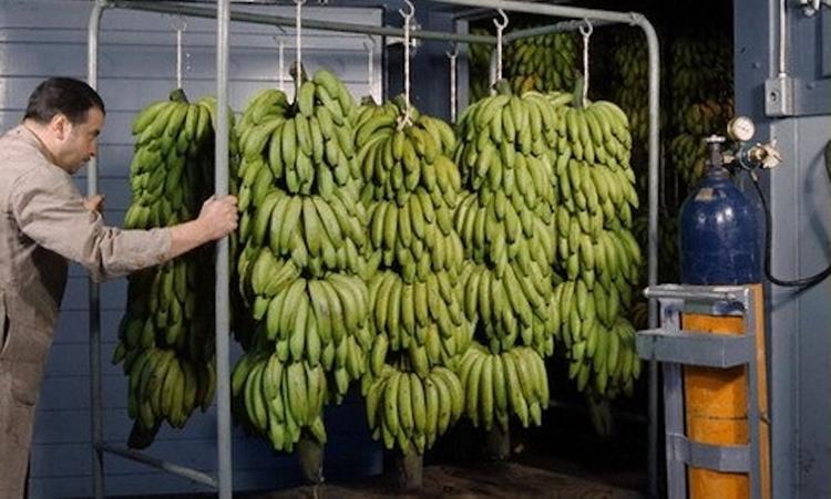Бананы полезны не всегда