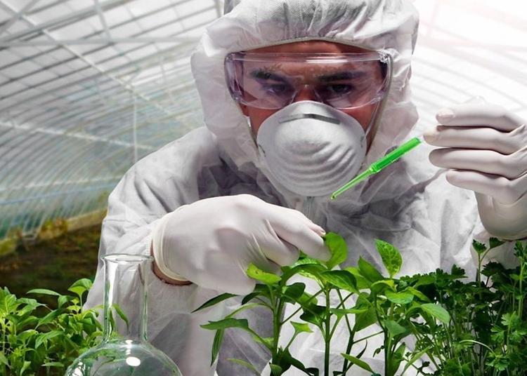 Чем опасно употребление ГМО и что такое акваконституция