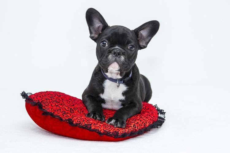 Женщина проколола своей любимой собаке ухо и надела серьгу с бриллиантом в три карата
