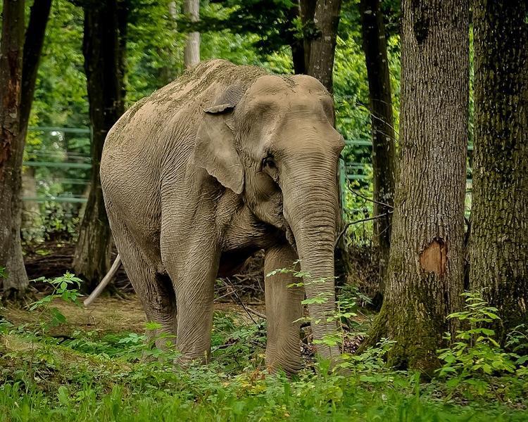 В Индии слон напал на людей, пятеро погибших