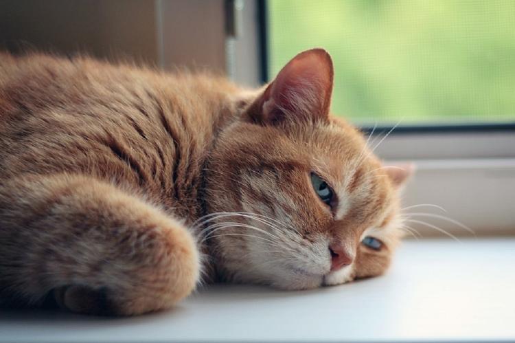 Ученые: кошки преданы хозяевам не меньше собак