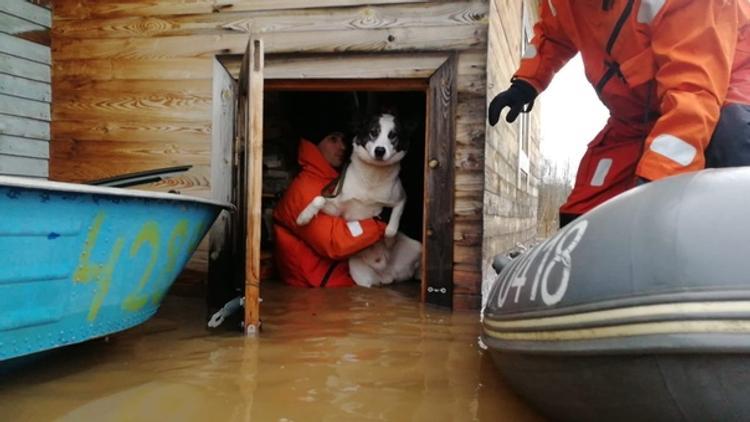 В Новгородской и Вологодской областях ликвидируют последствия сильных наводнений