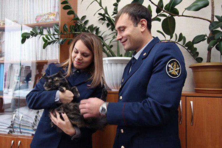 Кота-наркокурьера поймали в российской тюрьме и отправили на перевоспитание в приют