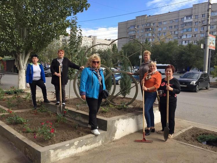 В Волгограде на грантовые деньги посадили розы и можжевельник