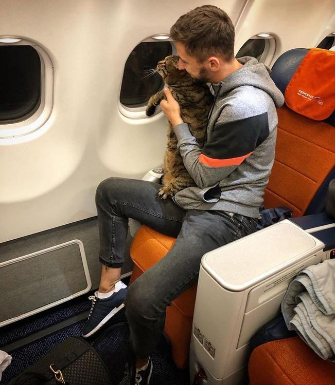 """Растолстевшего кота не пускали в самолет. Усатому пришлось искать дублершу, чтобы пройти процедуру """"взвешивания"""""""