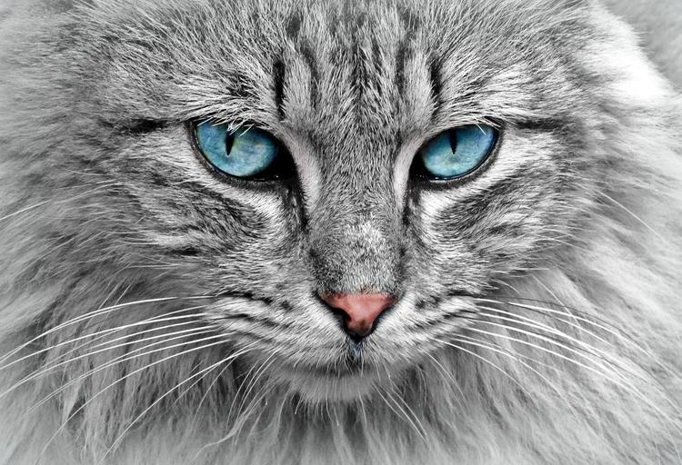 В Лондоне супруги решили потратить выигранные в лотерее 3,5 млн фунтов на лечение кошки