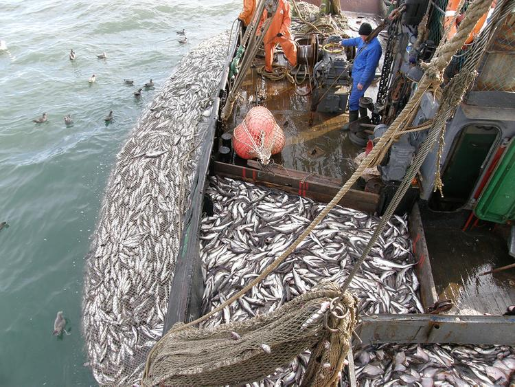 Почему рыбонасосы перестали качать каспийскую кильку?
