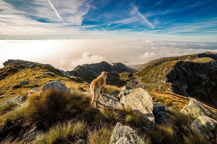 В Англии ветеринар вернула к жизни собаку спустя 10 минут после смерти