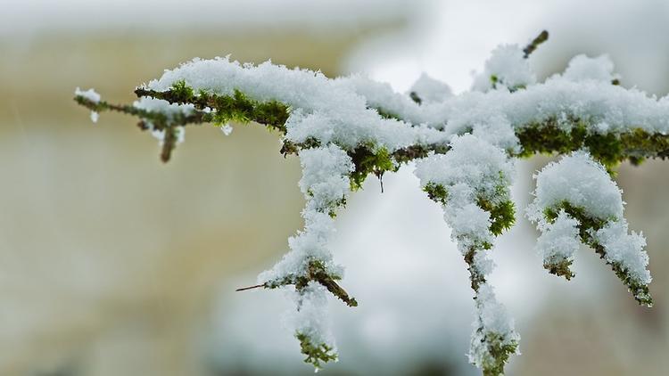В Москве туман сменится мокрым снегом