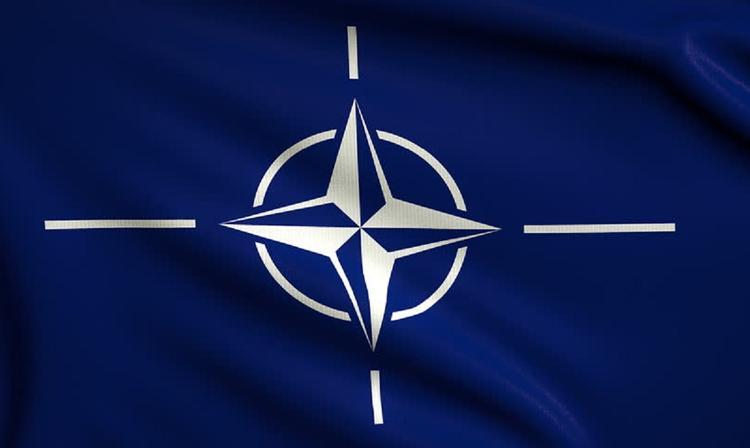 В Балтике при подготовке к учениям НАТО погибли 18 морских свиней