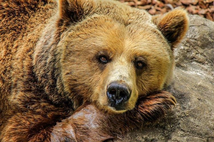 В Удмуртии медведь загрыз мужчину