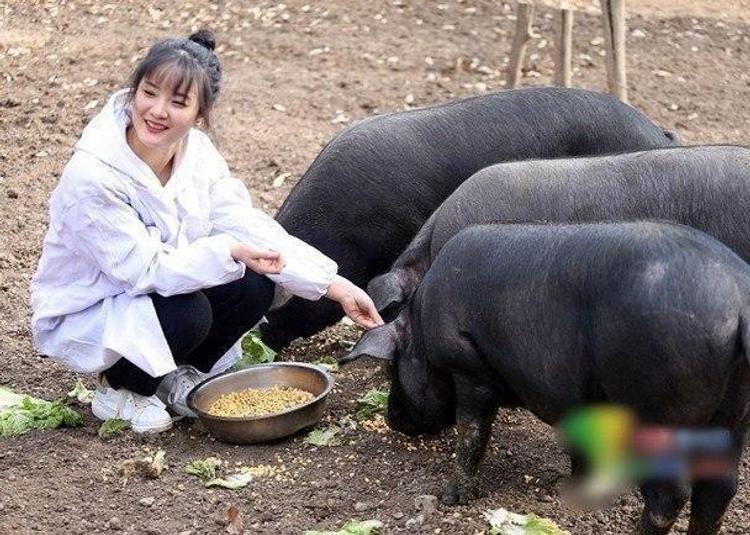 """""""Отдам дочь и 300 свиней"""", но есть условие. В Китае ищут жениха и любителя хрюшек"""