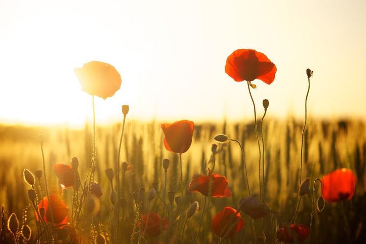 Австралия: фермеры вместо пшеницы решили выращивать цветы