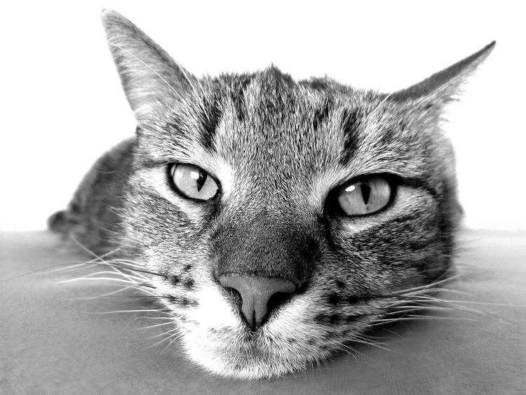 Липовецкий район: кот неумышленно убил ребёнка