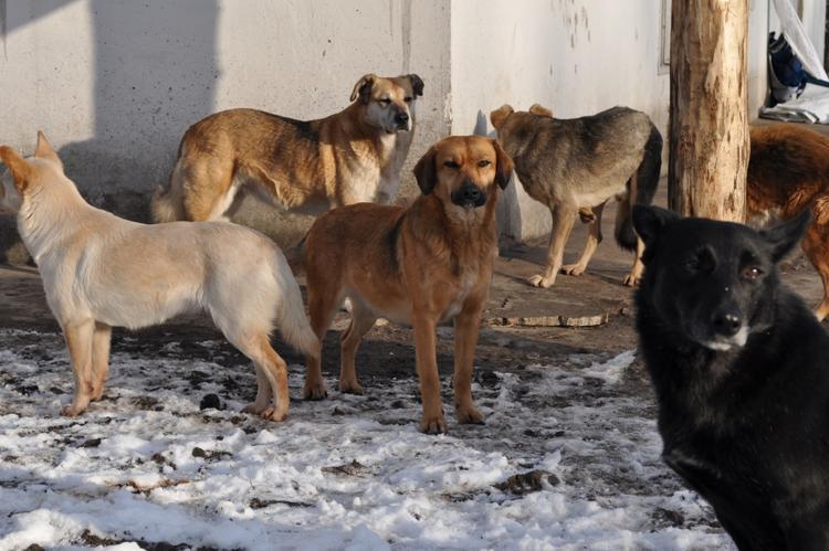За растерзанную собаку девочке выплатили штраф 30 тыс рублей