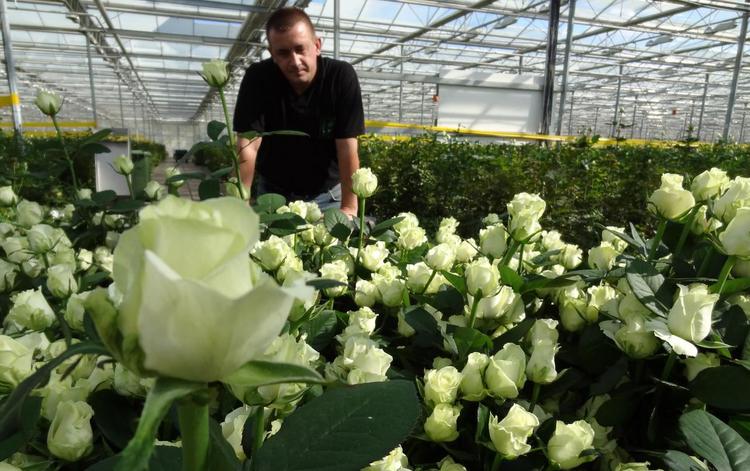 Вянет роза от...  банкротства?