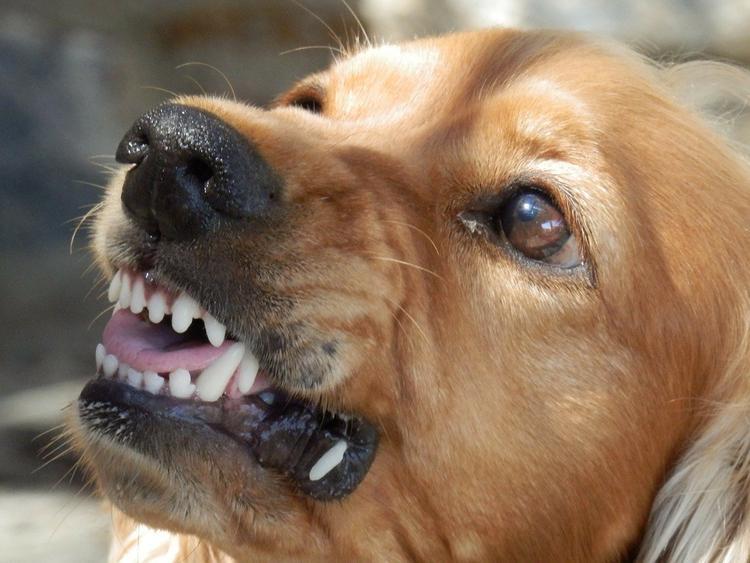 Стая  бездомных собак напала и покусала мальчика под Екатеринбургом