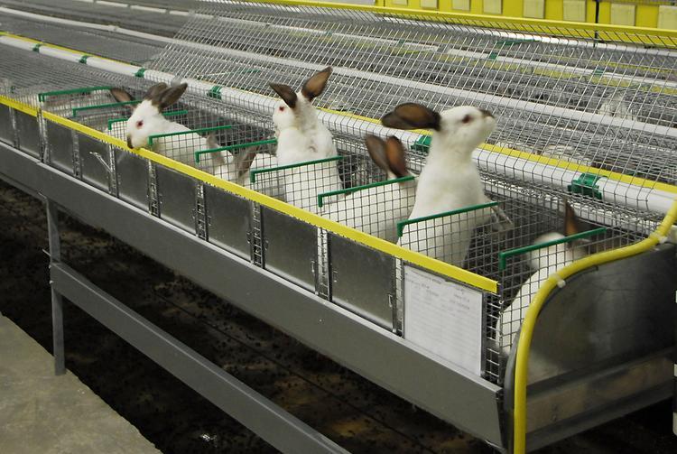 Как создать крупнейшую в своем районе кролиководческую ферму