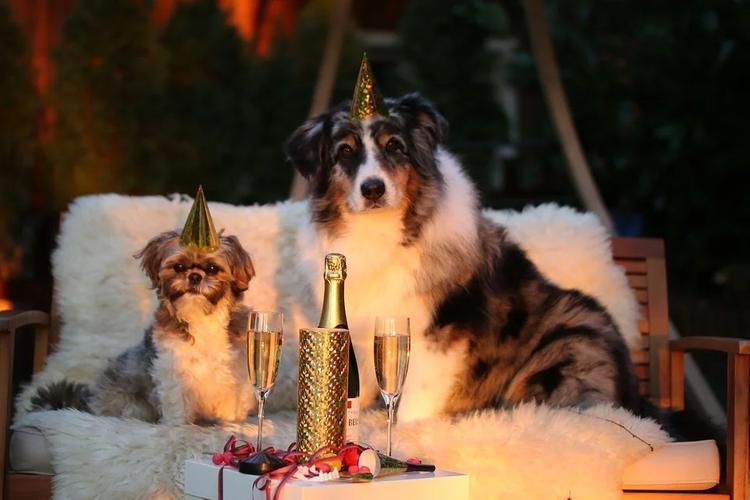Специалисты рассказали, как обезопасить питомцев на Новый год
