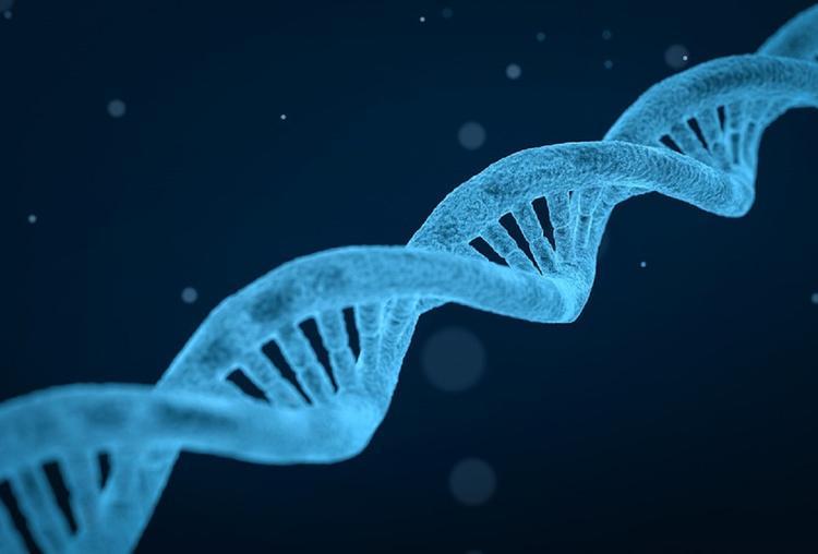 В Гарварде создают приложение для знакомств по ДНК