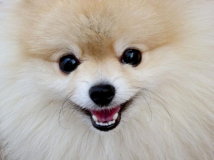 Ученые: собачьи эмоции лучше всех понимают люди определенного возраста и культуры