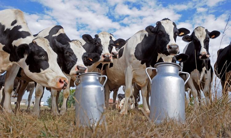 Молоко требует вливаний