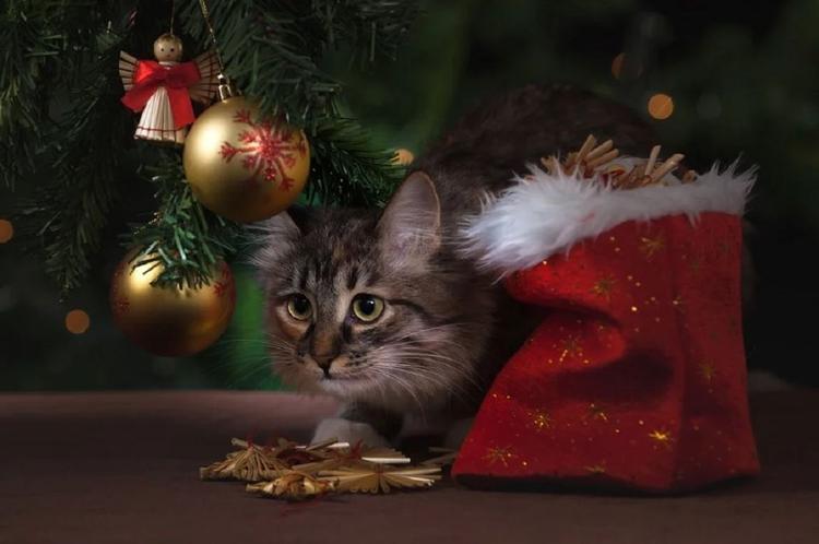 Новогодние чудеса: пропавшие в США и Британии коты и кошки вернулись домой