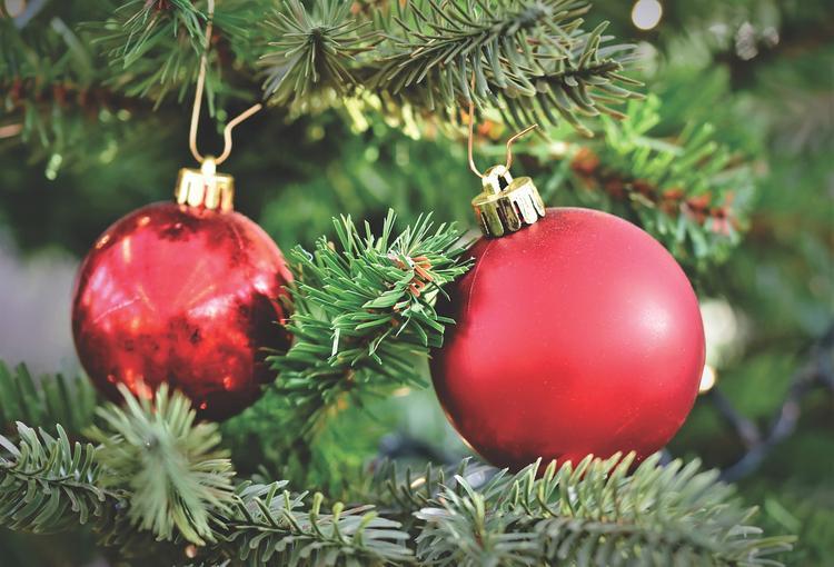В Москве начали работать пункты приема новогодних елок