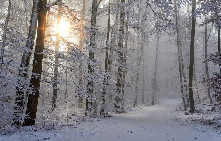Синоптики: в конце новогодних праздников ожидается похолодание и снег